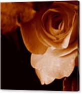 Sepia Series - Rose Petals Canvas Print