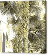 Sepia Toned Pen And Ink Palm Trees Canvas Print
