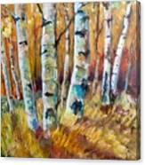 September Aspen Canvas Print
