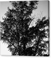 September Tree ... Canvas Print