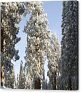 Sequoia National Park 4 Canvas Print