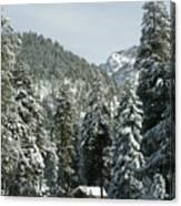 Sequoia National Park 7 Canvas Print