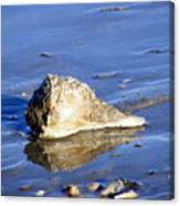 Serene Conch Shell At Isle Of Palms Canvas Print