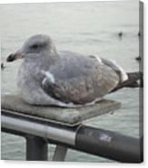 Serene Seagull Canvas Print