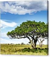 Serengeti Acacia Canvas Print