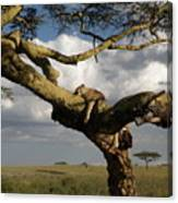 Serengeti Dreams Canvas Print