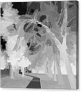Series Of Black And White 47 Canvas Print