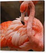 Serious Flamingo Canvas Print