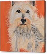 Serious Westie Canvas Print
