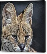 Serval Portrait Canvas Print