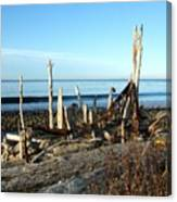 Seth's Seaside Driftwood Sculpture  Canvas Print