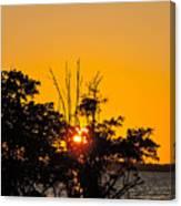 Setting Mangrove Sun Canvas Print