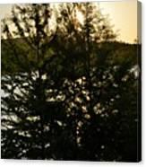 Setting Sun Through A Cypress Tree Canvas Print