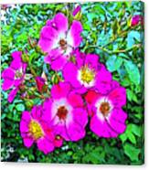 Seven Sisters Rose Variant Canvas Print