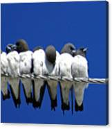Seven Swallows Sitting Canvas Print