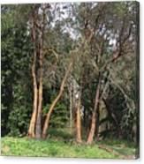Seward Park Trees Canvas Print