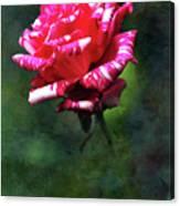 Sexy Rexy Rose Canvas Print