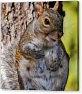 Sexy Squirrel Canvas Print