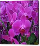 Sf Pink Flowers Canvas Print