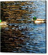 Shade And Sunlight - Mallard Ducks Canvas Print