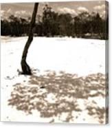 Shade Tree Canvas Print