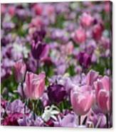Days Of Wine And Tulips Canvas Print