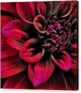 Shades Of Red - Dahlia Canvas Print