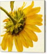 Shades Of Yellows Canvas Print