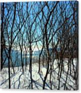 Shadow Branches Canvas Print
