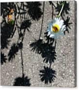 Shadow Daisy Canvas Print