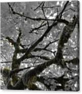 Shadow Moss Canvas Print