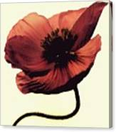 Shadow Poppy Canvas Print