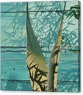 Shadowed Agave Canvas Print