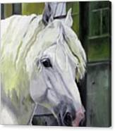 Shadowfax Canvas Print