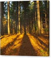 Shadows In Forrest  Canvas Print
