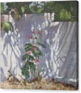Shadows Number Six Canvas Print