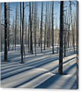 Shadows Of The Forest Canvas Print