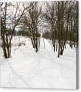 Shadows Of Winter Canvas Print