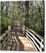 Shadows On A Boardwalk Through The Swamp Canvas Print