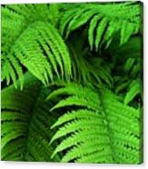 Shadowy Fern Canvas Print