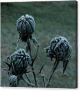 Shadowy Frozen Pods From The Darkside Canvas Print