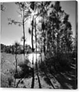 Shadowy Path Canvas Print