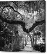Shadowy Pathway Canvas Print