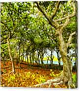 Shady Grove At Wai'anapanapa Canvas Print