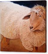 Shaggy Sheep Canvas Print
