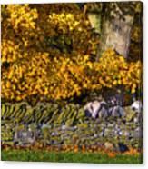 Shaker Stone Fence 4 Canvas Print