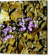 Shale Garden.  Canvas Print