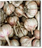 Shantung Garlic Canvas Print