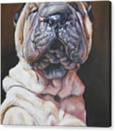 Shar Pei Pup Canvas Print