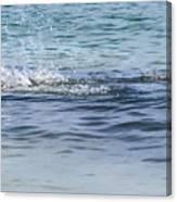 Shark Catching A Fish Canvas Print